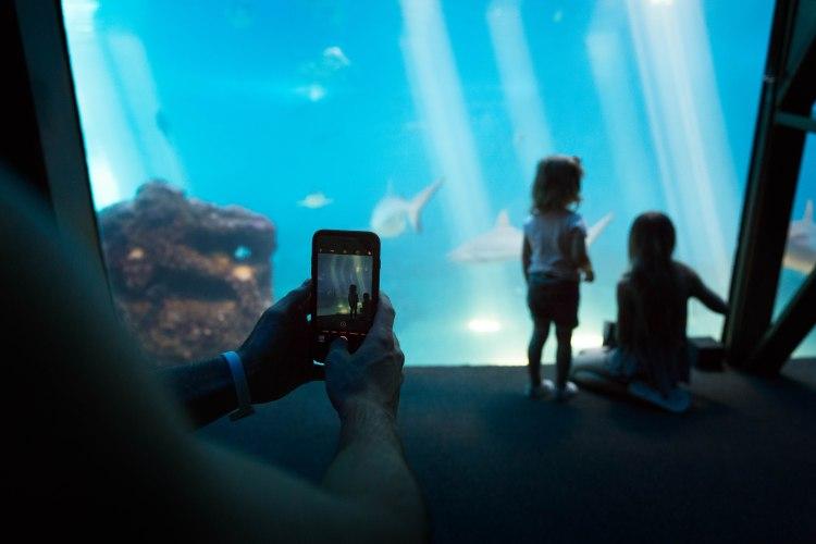 aquarium phone2